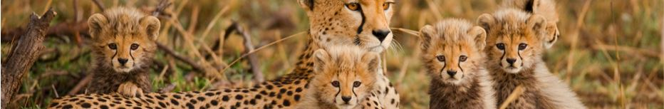 Wildlife Tour of South Africa